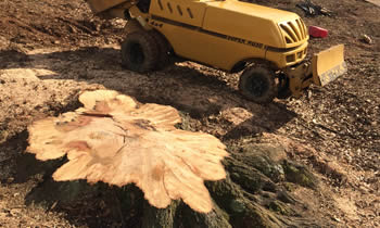 Stump Removal in Seattle WA Stump Removal Services in Seattle WA Stump Removal Professionals Seattle WA Tree Services in Seattle WA