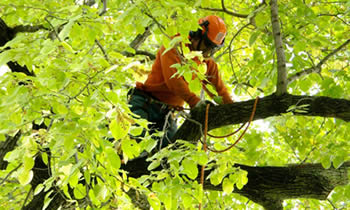Tree Trimming in Seattle WA Tree Trimming Services in Seattle WA Tree Trimming Professionals in Seattle WA Tree Services in Seattle WA Tree Trimming Estimates in Seattle WA Tree Trimming Quotes in Seattle WA